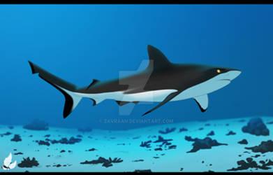 Bermino the black shark
