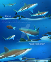 SHARKS Page 3 PREVIEW