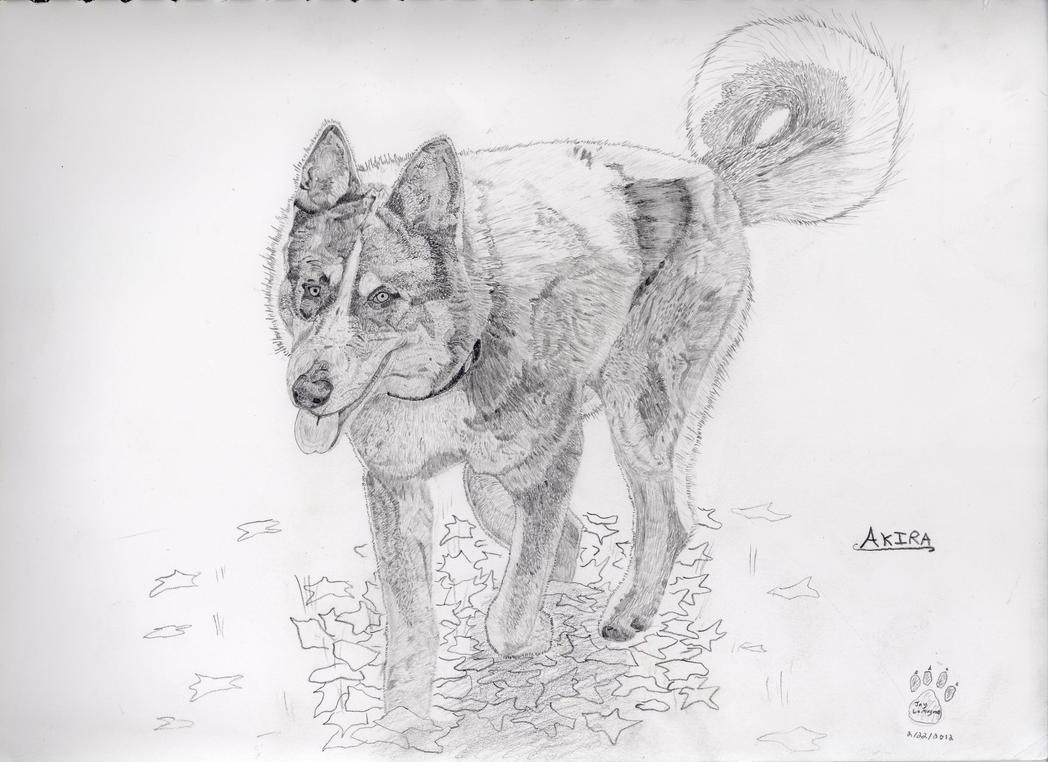 Akira the Wolf by TBATAWAMOATANIP