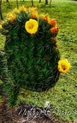 Nopal Con Flor by NatanaelBram