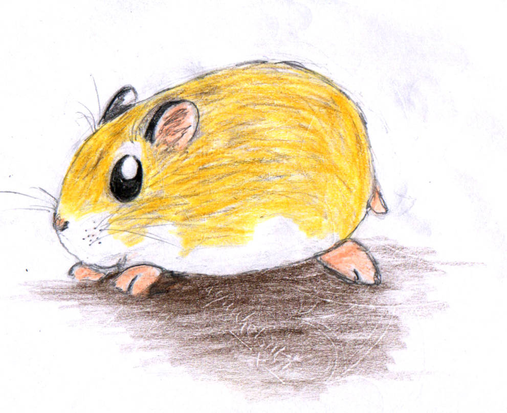 chibi roborovski hamster by HoLLyp0p on DeviantArt