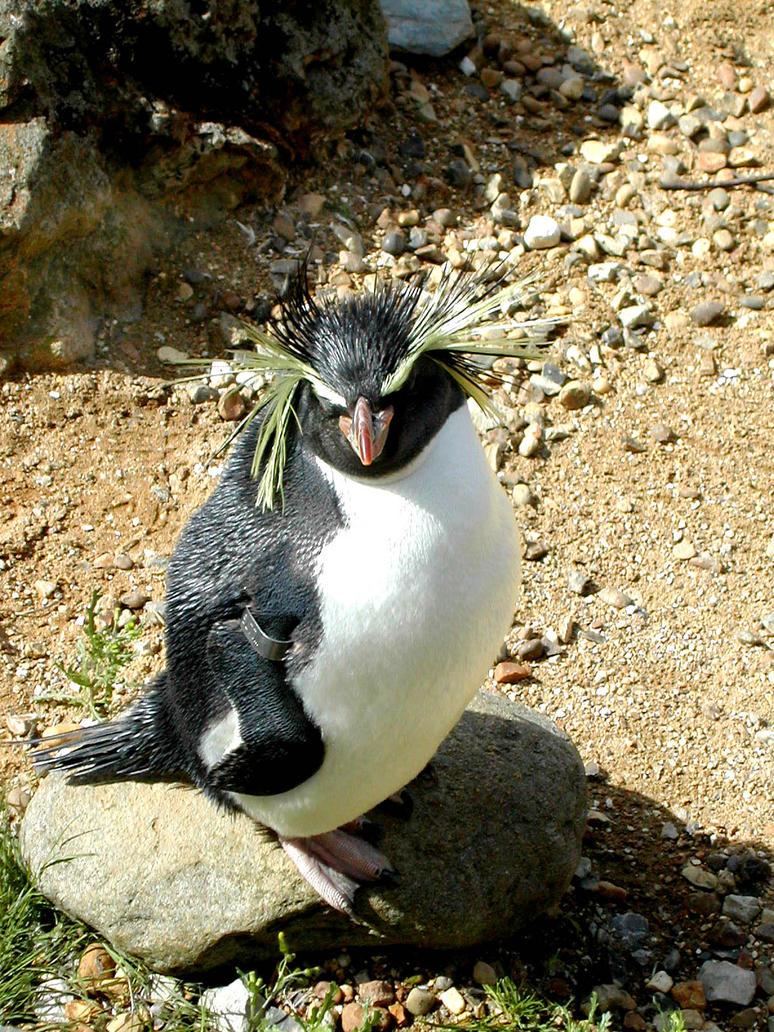 Mr T - penguin by HoLLyp0p
