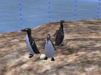 Great Auk Colony ZT2 by ChrisM199
