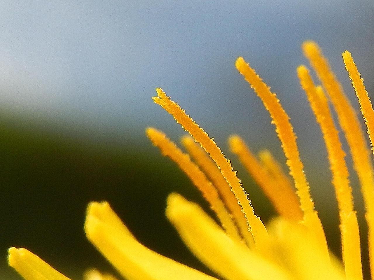 leuchtend gelb by solosombra