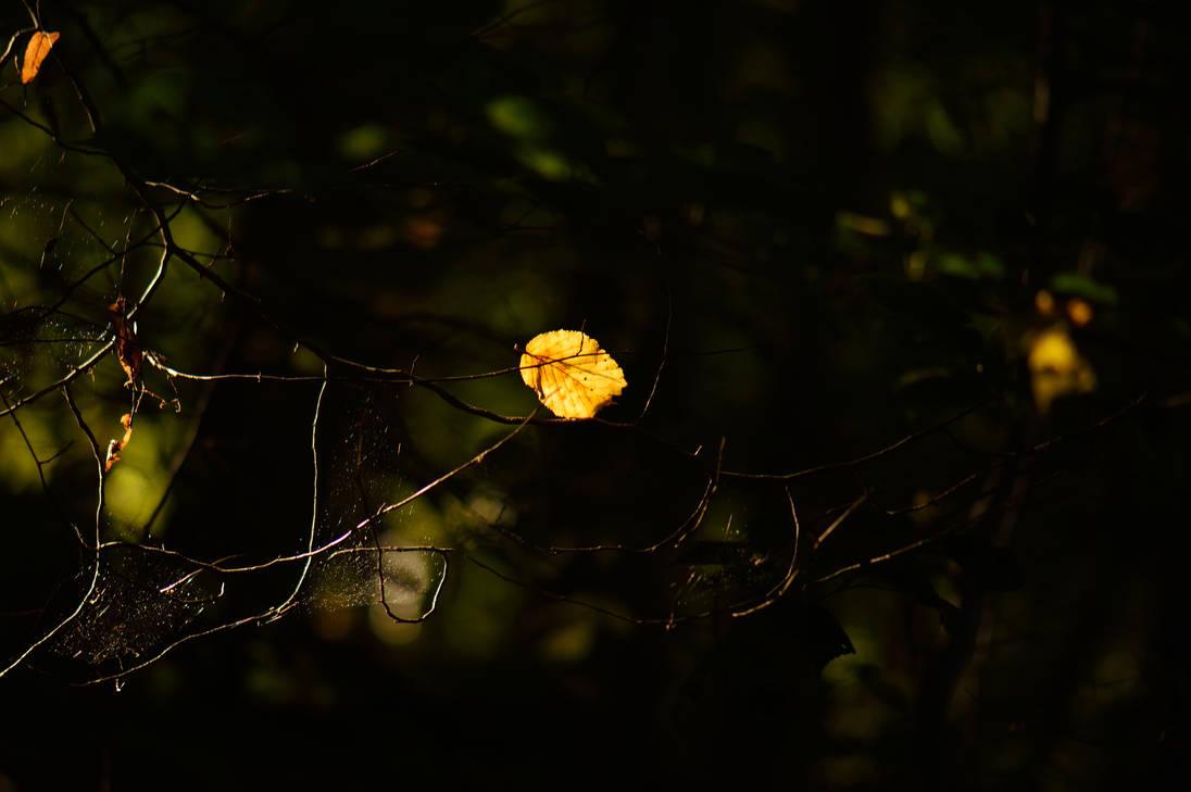 und dieser herrlich leuchtet by solosombra