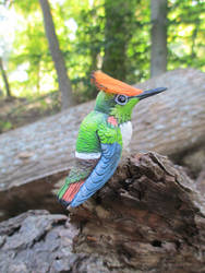 Short-crested Coquette for Losing Altitude project by tallydragon