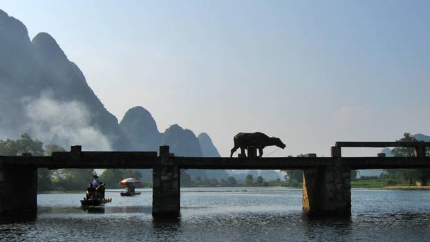 Cow on Bridge