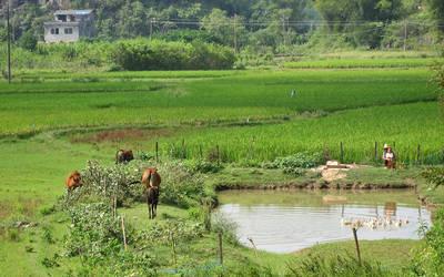 Rice fields near Yulong river