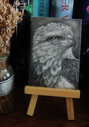 Eagle Portrait ATC by paintbigflowers