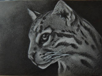 Ocelot ATC by paintbigflowers
