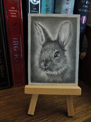 Wild Rabbit ACEO by paintbigflowers