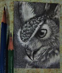 Owl Portrait ACEO by paintbigflowers