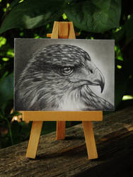 Eagle Portrait ACEO by paintbigflowers