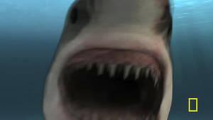 Shark burp
