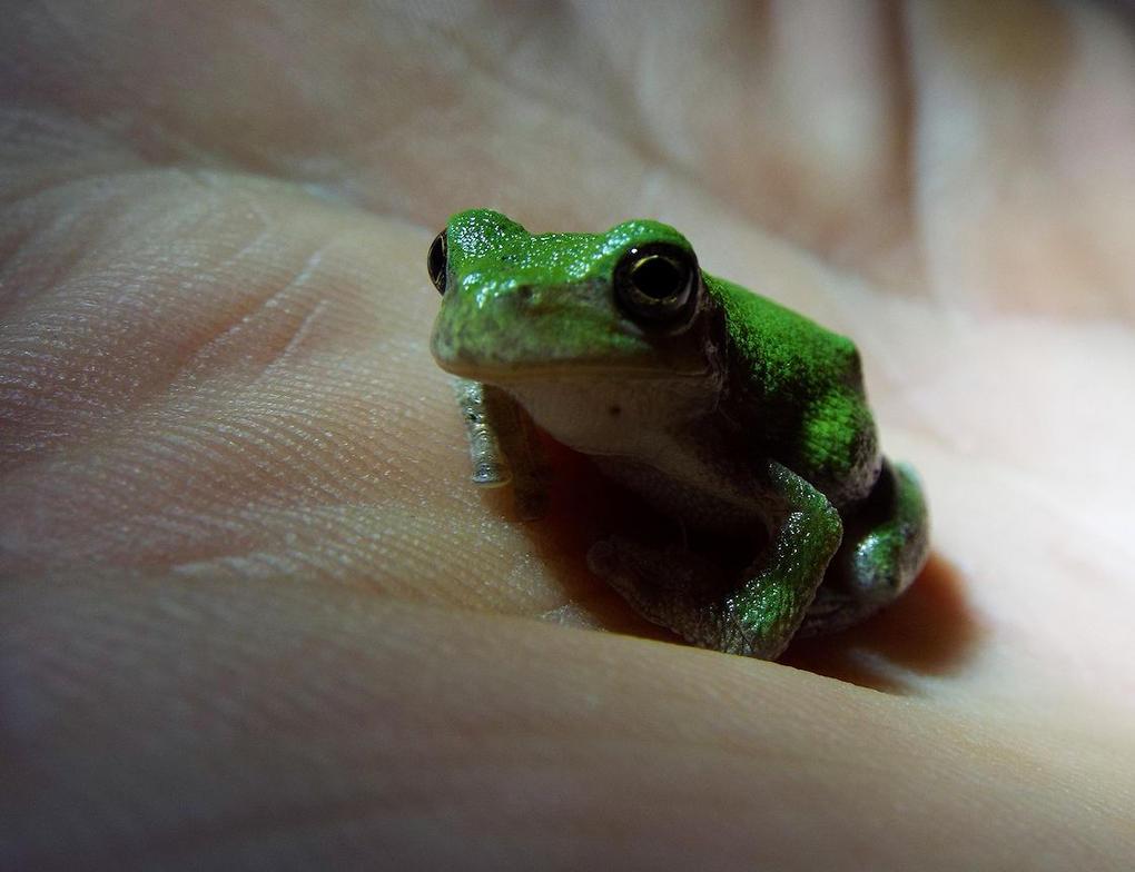 Tree Frog Stock #3 by D-E-V-I-A-N-T-A-R-T