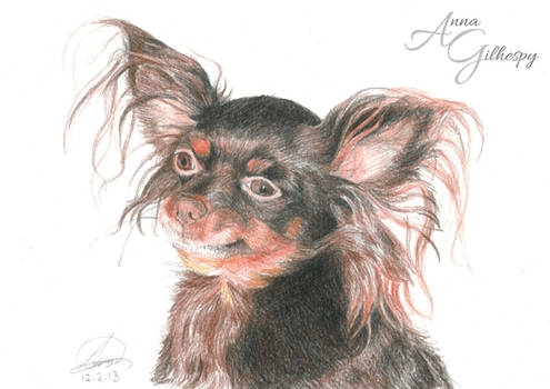 Dog portrait in colour pencil 01 - Zina
