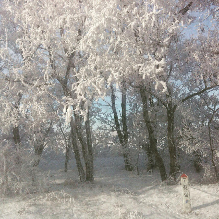 Winter forest on daroga the Caucasus by GrawMonteCristo