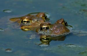 frogs by dzaninov