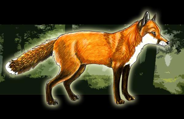 http://fc01.deviantart.com/fs29/f/2008/089/1/b/Fox_by_DarkAngel613613.jpg