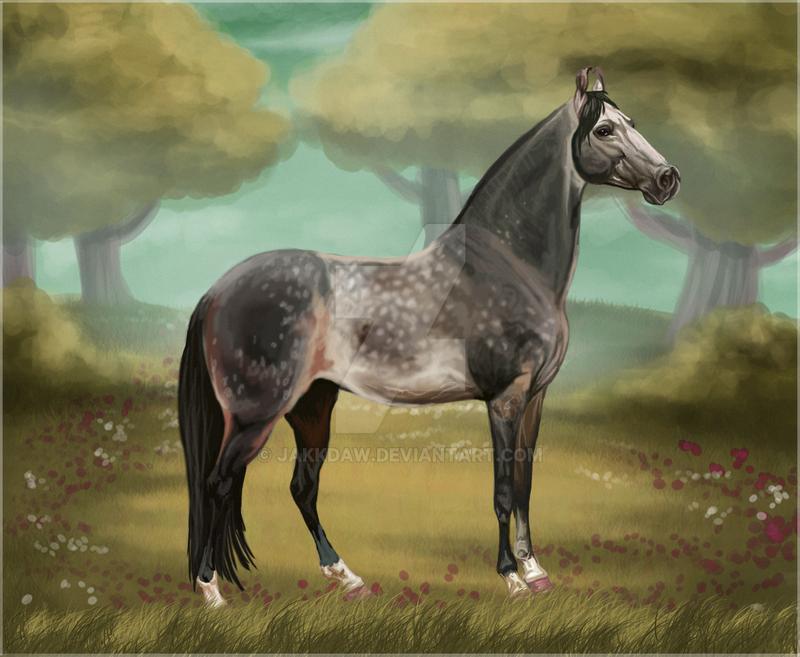 Marwari Stallion by Jakkdaw