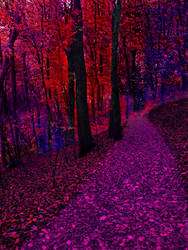 Colorful forest