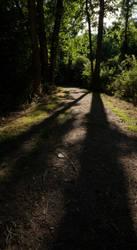 Into the Woodland by um3k