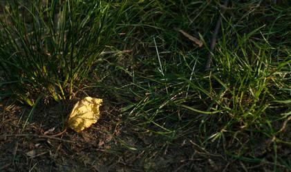 Leaf, Alone by um3k