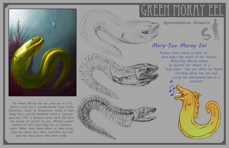 Green Moray Eel by Phee on DeviantArt