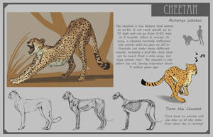 Cheetah by Phee