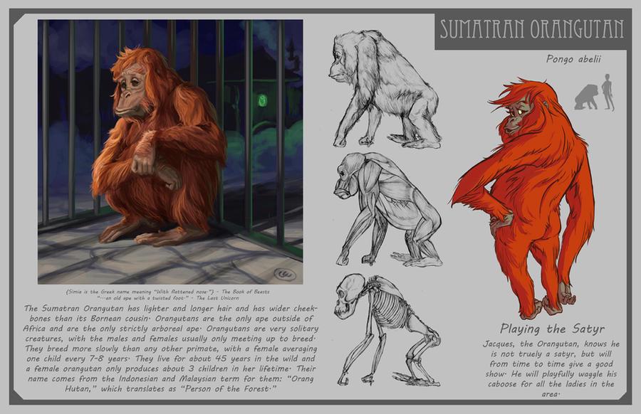 Orangutan by Phee