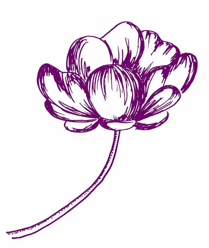 Flower Drawing On Tumblr: Flower Sketch By Cuzzycutegirl On DeviantArt