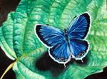 drop by butterfly