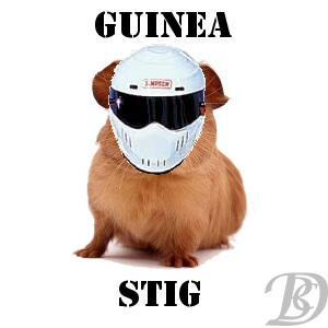 Guinea Stig