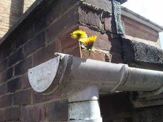 Gutters need cleaning then...