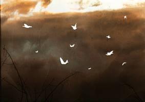 sigur ros birds