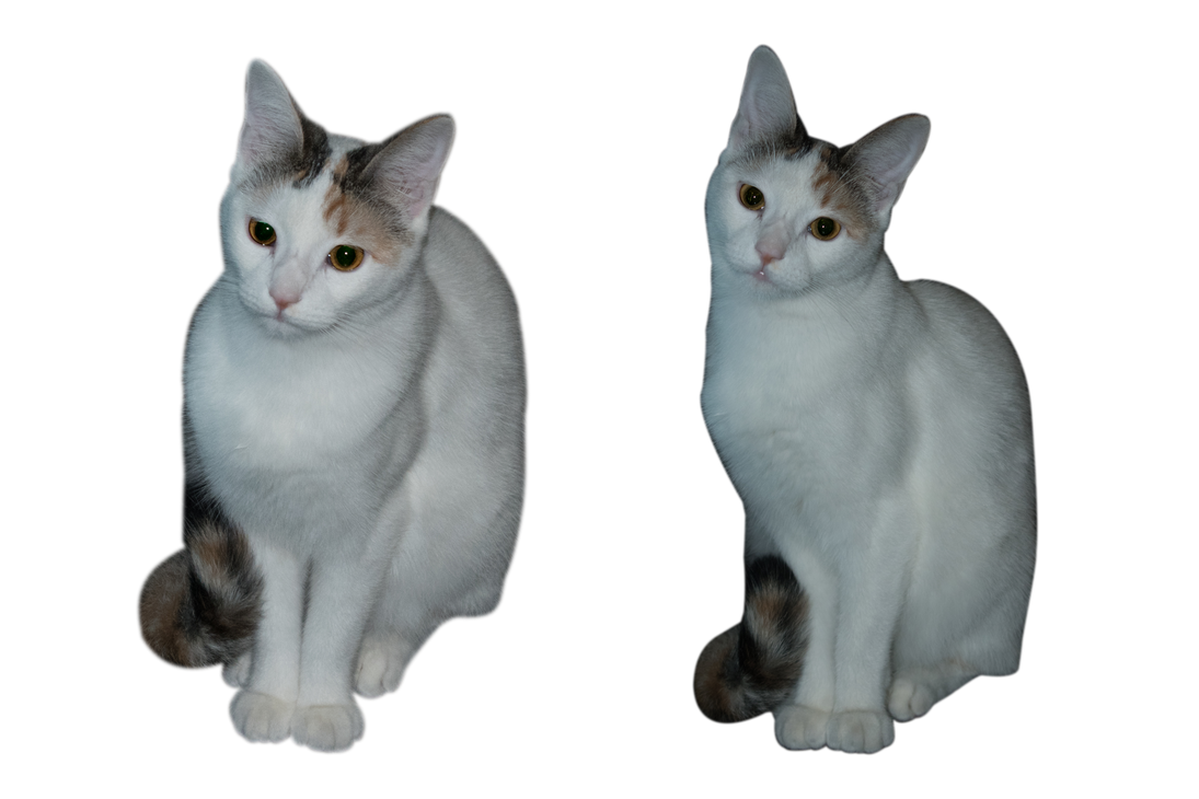 MY CAT PNG by AntonioGN