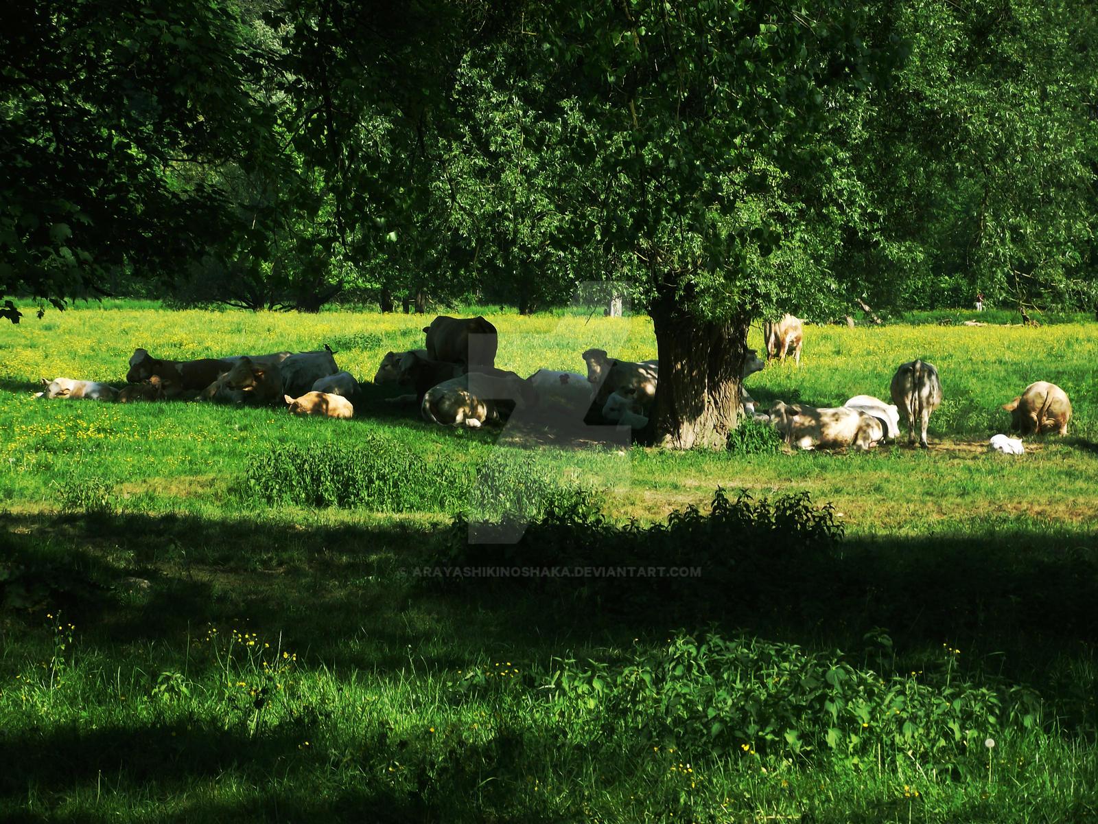 Rural by Arayashikinoshaka