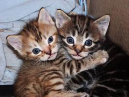 Lovely couple of kitten by Arayashikinoshaka