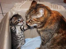 Play with mom ! by Arayashikinoshaka