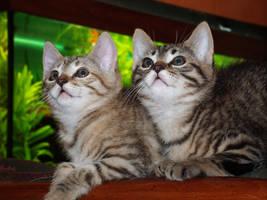 Twins sisters by Arayashikinoshaka