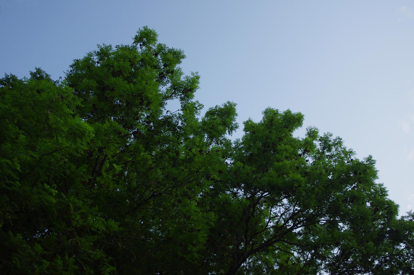 Green forever by Arayashikinoshaka