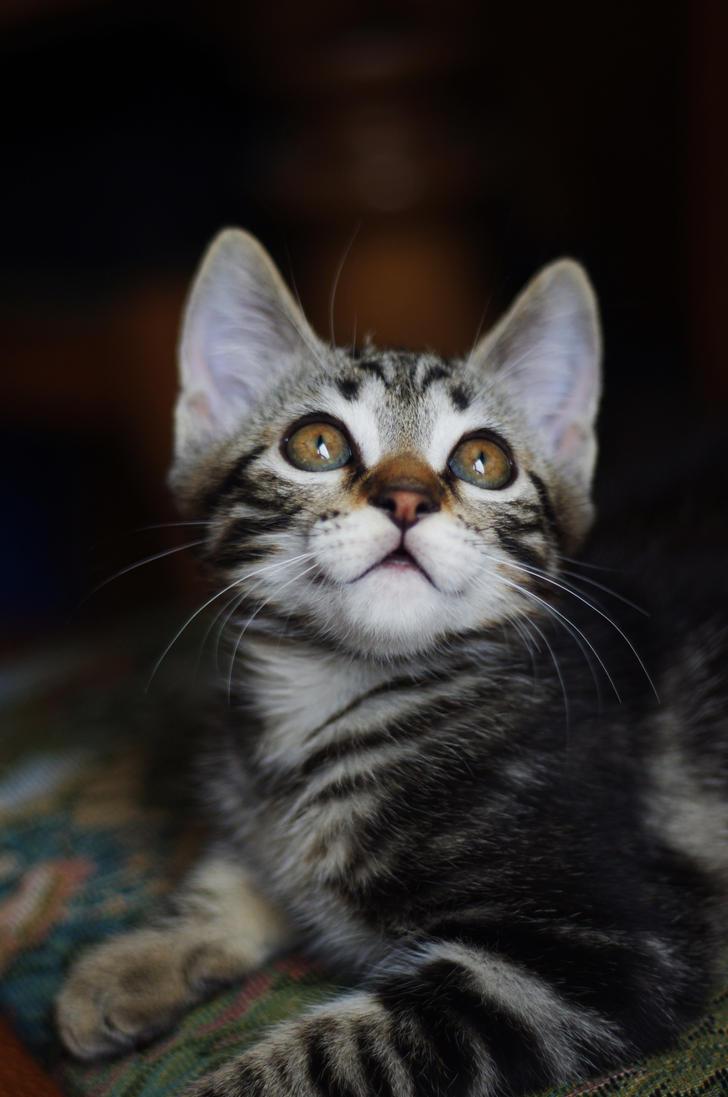 Perfect kitten ! by Arayashikinoshaka