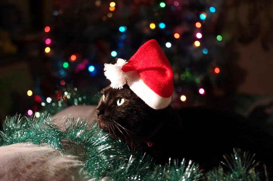 My Santa Claus by Arayashikinoshaka