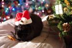 Bunny Christmas meal