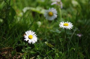 Beautiful spring by Arayashikinoshaka
