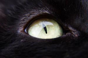 Cat's eye by Arayashikinoshaka