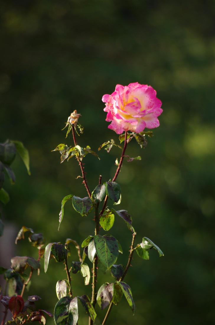 Floral by Arayashikinoshaka