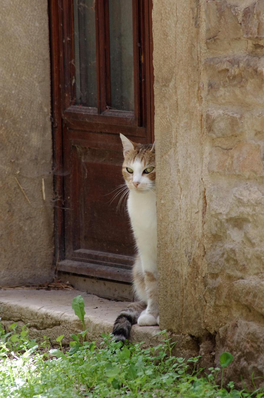 Sneaky Cat By Arayashikinoshaka On DeviantArt