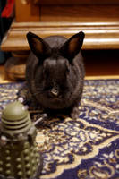 Bunny vs Dalek II by Arayashikinoshaka