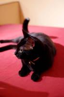 Cat on a red table by Arayashikinoshaka